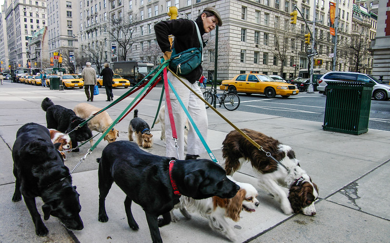 Dog walker outside the Met