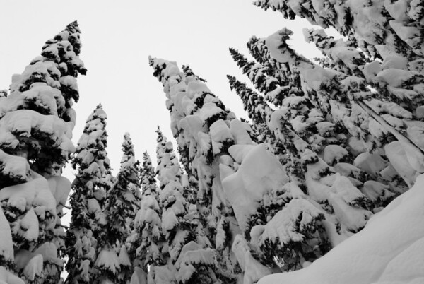 Whistler snow kings