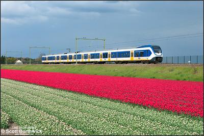 Nederlandse Spoorwegen (NS) SLT 'Sprinter Lighttrain', 2602 passes the tulip fields at Vogelenzand whilst forming RE6369 1721 Haarlem-Den Haag Centraal on 29/04/2015.