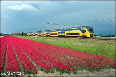 Nederlandse Spoorwegen (NS)  DD-VIRM-2 electric multiple unit, 8721 passes the tulip fields at Vogelenzand whilst forming IC2252 1620 Dordrecht-Amsterdam Centraal on 29/04/2015.