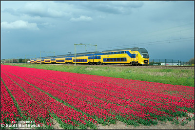 Nederlandse Spoorwegen (NS)  DD-VIRM-3 electric multiple unit, 8739 passes the tulip fields at Vogelenzand whilst forming IC2167 Amsterdam Centraal-Den Haag Centraal on 29/04/2015.