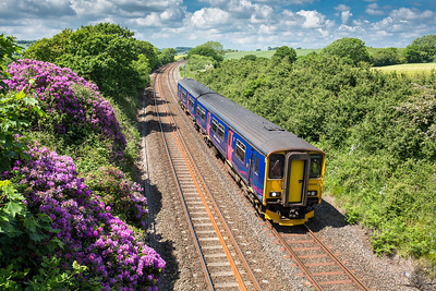 080616  With the rhododendrons nearly past there best,150243  on the 2P86 1141 Penzance to Plymouth pass Polbathic bridge  between Trerulefoot and St Germans