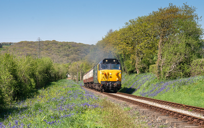 060518  50042 heads past an embankment of bluebells near Boscarne Junction with the mid afternoon service to Bodmin general
