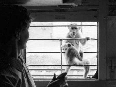 A curious monkey
