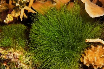 Green underwater bush