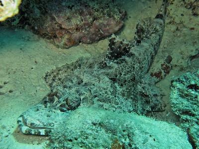 Cymbacephalus beauforti