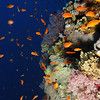 St John's Reef, Red Sea, EgyptFeb 2010