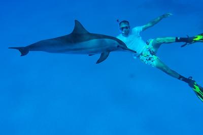 L'homme et le dauphin