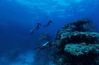 Extreme visibility - St John's reef, Egypt