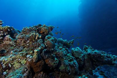 Reef atmosphere