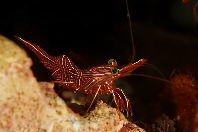 Invertebrate species