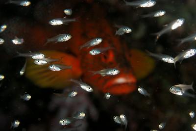 Ambush predator - Similan islands, Thailand, 2011