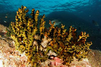 Sponges - Andaman Sea