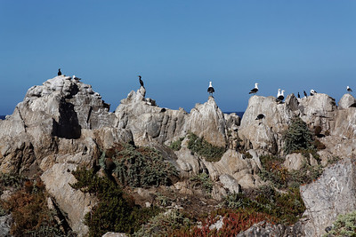 Birds - Las Cruces, Chile