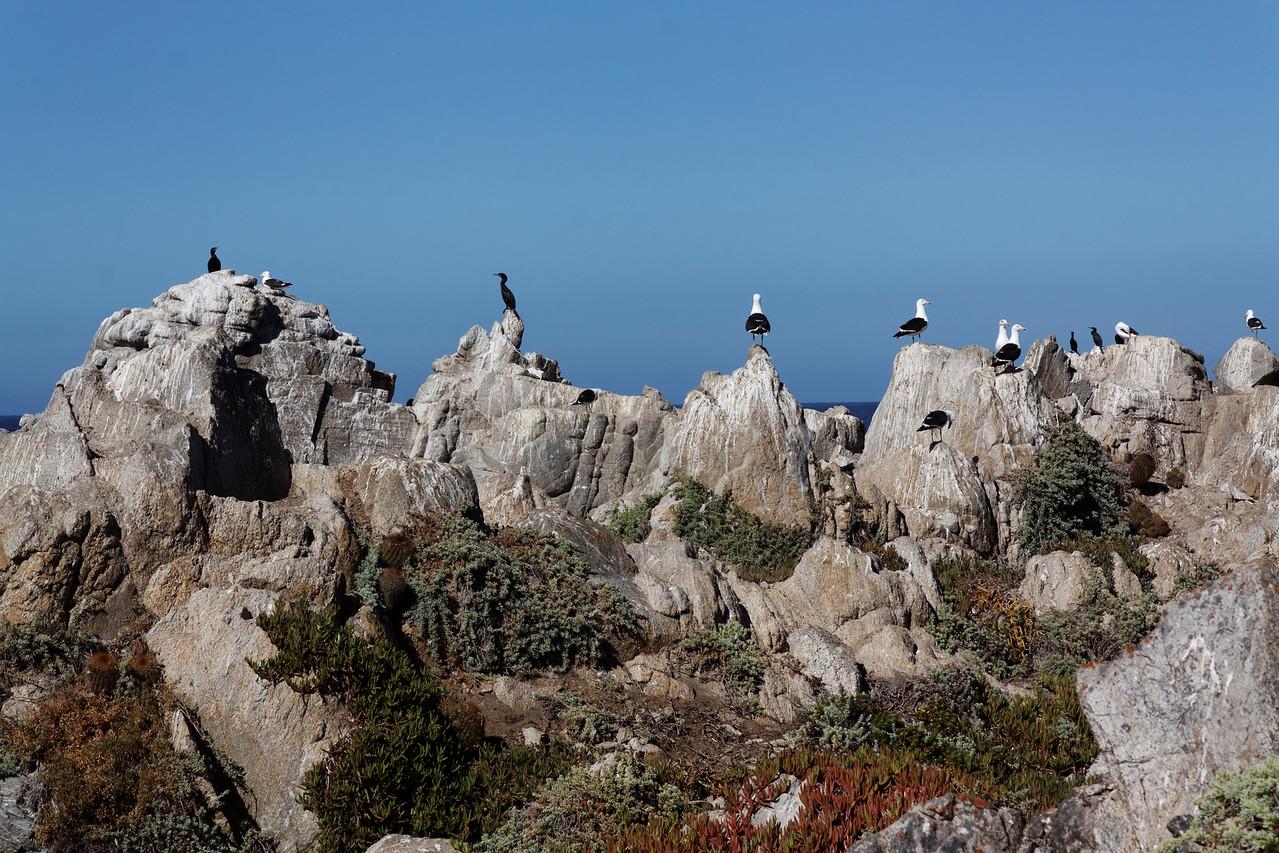 Birds - Las Cruces, Chile