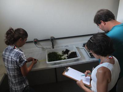 Benthos tutorial - Weighting the algae (Marcelle, Ana-Paula, Vinicius)