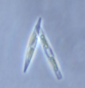 Sample 132 Ice 0-3 cm x40