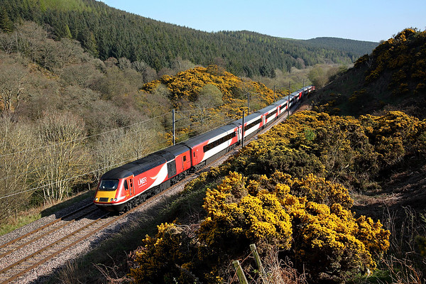 43306 runs through Penmanshiel wood on 1S16 12:00 LKX - Inverness, 19/04/19