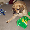 Louie is ready to play  ( 2010 )