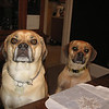 Puggle brothers  ( 2010 )