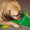 Louie and his gator  ( 2010 )