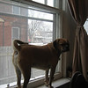 Buster in the window  ( 2010 )
