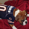 Boone in a Bears jersey ( 2011 )