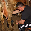 "Getting milking experience. - We had a surprise visit today from a Niece and her hubby.  Her hubby is a ""city boy"" from the east coast.  So since they were here at ""milking"" time they agreed to go see if they could get any milk out of the one cow we have in milk.  Unfortunately she doesn't have much at the end of the day, cause the calf takes it all...but they did get a few squirts out of her, so they can say they have milked a cow...or so he can say that, as our niece did grow up back here on the farm, so may have run into that situation before.  LOL"
