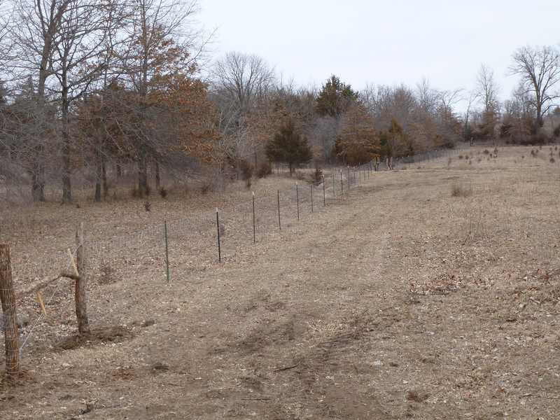 Hayfield Fence - Yesterday, a friend came over, and we built a fence between the hayfield and the other pasture. The cows were NOT happy.....