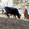 Sharing Alfalfa... - ....as long as they didn't get too close.