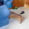 I have NO idea WHAT she was doing......but she sure made me laugh while she was doing it.  Peaches discovered the hollow space in the footrest of the couch today, and kept sticking her head in there.  It was rather funny to see.  :-))