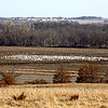 "Real or Fake Geese? - We saw these on our way back from my parents yesterday, and had to get a photo...we didn't go see if they were real, but are pretty sure they were.  LOL  Unlike the time I tell about on my blog at the following link.  *giggle*    <a href=""http://dapperdoxie.blogspot.com/2012/02/wild-goose-chase.html"" rel=""nofollow"">dapperdoxie.blogspot.com/2012/02/wild-goose-chase.html</a>"