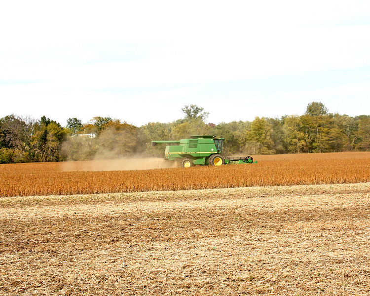 Harvest is in full swing here!  This is just to the south of our house.