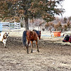 FOOD! - When we opened the gate, and took off the halter, she made a bee-line for the hay feeder.