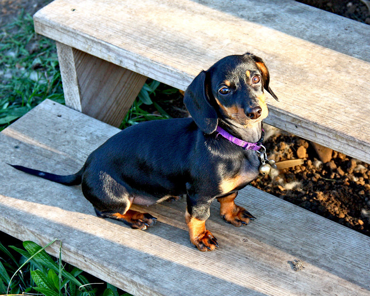 Belle sitting on the step.  She's still growing like a weed!