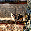 Sunning herself - One of our cats was enjoying the early morning sunshine, on the line fence.