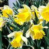 040913 News Spring