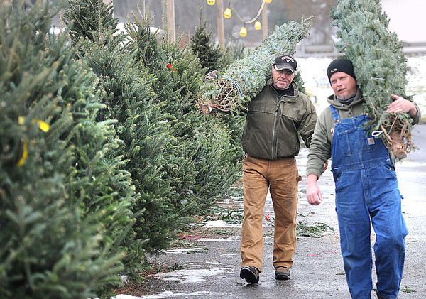 Dan Miles, left and Kyle Stewart, both worker at the Beckley Little League Christmas tree lot off of Eisenhower Drive are carrying fraser fir trees. The lot is opened 10 am to 7 p.m.  and they are selling frasers ranging from $25. to $50. All proceeds go to the Beckley Little League.<br /> Rick Barbero/The Register-Herald