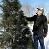 Piney Tree Farm owner, Charles Hudson looks over one of his White Pine Christmas trees, which is his most popular seller. F. Brian Ferguson/The Register-Herald