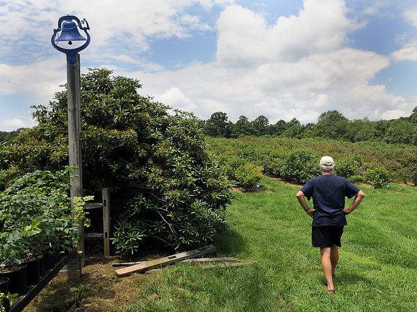 Blueberry Hill owner, Jim Beha takes in this years crop at his farm in Flat Top, Blueberry Hill, which is the largest U pick farm in West Virginia will be open on Tuesday 8-8, Thursday 8-8, and Saturday 8-6. (304) 787-3930