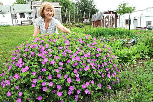 Mary Beth Lee, of Beckley, works with her giant Martha Washington geranium.<br /> Rick Barbero/The Register-Herald