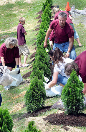 Employees of BB&T plant dozens of Emerald Green Arborvitae trees around the Lively Family Amphitheater on Wednesday afternoon as part of the Lighthouse Project community service.
