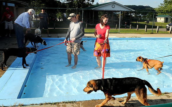 Area residents took their dogs into the New River Pool  during Tuesday's dog swim, with donations going to the Raleigh County Humane Society. F. Brian Ferguson/The Register-Herald