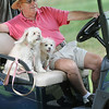 Doug Ball, of Daniels, with his two dogs birdie and bogey  watch BNI on the Cobb course at Glade Springs.<br /> Rick Barbero/The Register-Herald