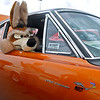 Brad Davis/The Register-Herald<br /> A life-sized, stuffed Wile E. Coyote pokes his head out the window of Beckley resident Blaine Toler's 1969 Plymouth Road Runner during the Shade Tree Car Club's annual auto show Sunday afternoon on the parking lot of the Crossroads Mall.