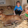 Rick Barbero/The Register-Herald<br /> Colbey Blankenship, 9, left, and his brother Riley Blankenship, 3, children of Rickey and Heather Blankenship, of Fayetteville, pet a recently born baby calve at the State Fair of West Virgina Dairy Birthing Center.