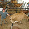 Rick Barbero/The Register-Herald<br /> Remington Perkins, of Frankford, WV working with cows at the State Fair of West Virgina Dairy Birthing Center.