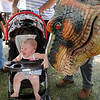 Rick Barbero/The Register-Herald<br /> Kinslee Martin, 10 months, daughter of Earl and Melanie Martin, of Narrows, Va. gets greeted by Buster the T-Rex at the State Fair of West Virginia. Rixie is totally realistic puppet that stands over 8' tall and 12' long performing daily at the fair.
