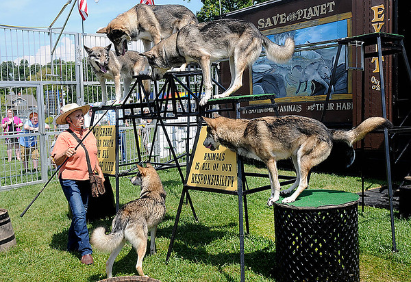 Rick Barbero/The Register-Herald<br /> Sharon Sandlufer performing with her wolves at the State Fair of West Virgina in Fairlea. The show demonstrates the natural behaviors of the wolves, their alertness, pack structure, ability in climbing, jumping, and a whole lot more.