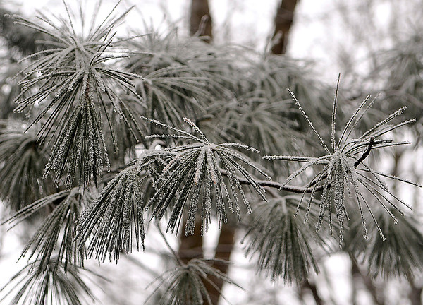 Brad Davis/The Register-Herald<br /> The Beckley area once again woke up to a scene out of a snow globe yesterday, with a thin layer of ice covering almost all the vegetation in the higher elevation areas around town.
